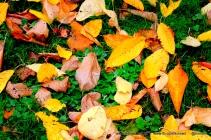 Fallen leaves at Kinneil