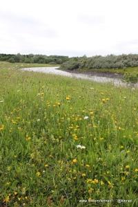 Kinneil Nature Reserve